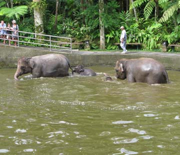 elephant-sanctuary-1