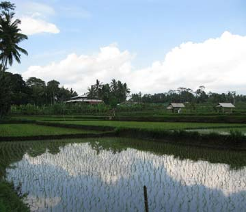 road-ubud-to-villa-3