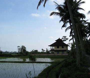 road-ubud-to-villa-4